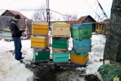Выносим пчёл из омшаника