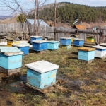 Пчелки на полянке