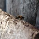 Пчела рада весне