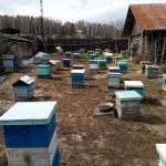 Конец апреля на пасеке в Сибири