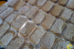 Сотовый мёд в упаковке Панский Сот, не рекомендую, это ужасно...
