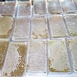 Классные контейнеры под сотовый мёд. Рекомендуем