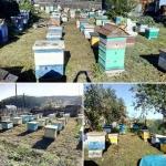 Пчелы стоят дома