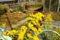 25 августа, пчелам выбирать не из чего