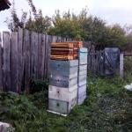 Выставили перговые рамки на осушку пчелкам