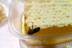 Пчелка сосёт мёд
