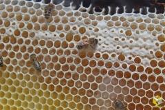 23 июля, начали печатать соты с луговым медом
