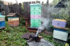 Начинаем откачивать рапсовый мёд