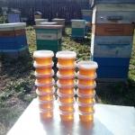 Свежий рапсовый мёд, 21 июля