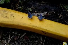 Бабочки на топорище