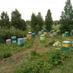 Кочевая пасека Старчевских