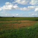 Обработка рапса (поле в 5км от пасеки)