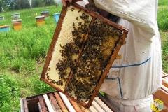 Строительная рамка. Сверху зрелый мёд, снизу трутневый расплод