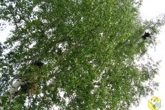 Пчеловод на дереве