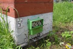 Пыльце уловитель на улье