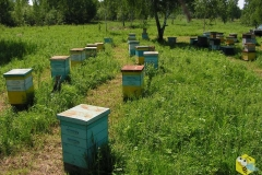 в 14-ти рамочных ульях стоит по 20 рамок. 10 гнездовых в первом корпусе, 4 во втором и 12 полурамок.
