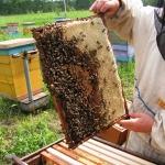 Свежий июньский мёд
