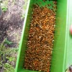 Образцы обножки пчел для изучения медоносов