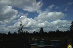 Рой пчёл в небе