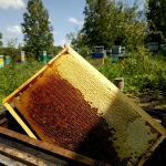 Весенний ивовый мёд