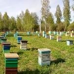 Хороший день. Пчёлы работают
