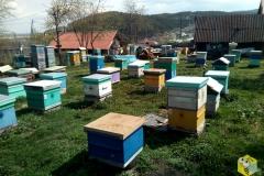 Пчелы ждут кочевки