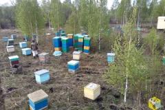 Вторая машина пчёл, 48 семей
