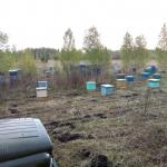 Кочевая пасека Сибири