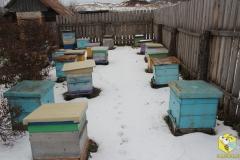 Убираем пчел на зимовку, 2014
