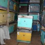 В этом году занесли пчёл по сухой погоде