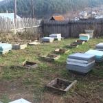 Убираем оставшихся пчёл