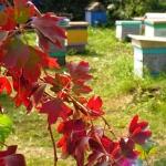 Осень. Лист барбариса