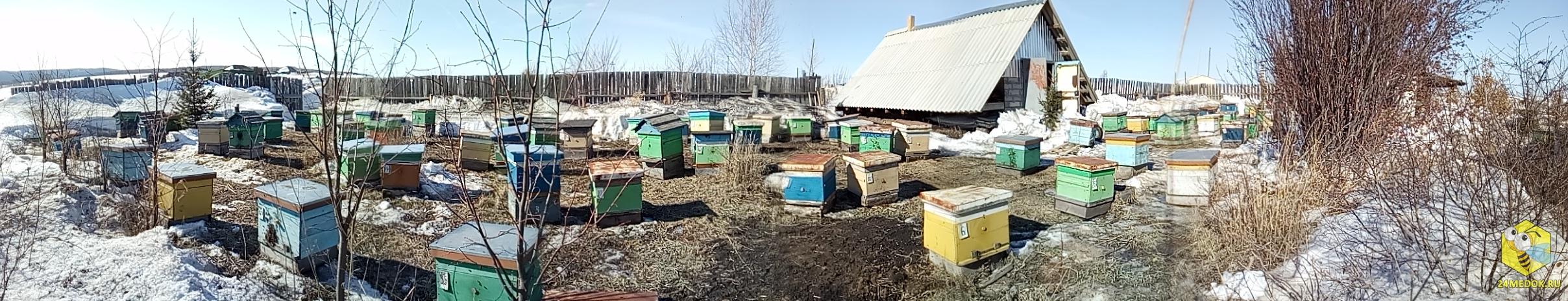 Панорама нашей пасеки в Красной Речке. Пчеловод Старчевский Е.Н.