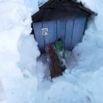 Вторая семья зимовавшая под снегом