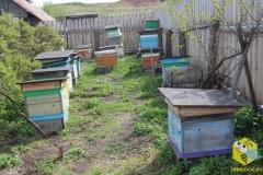 Пчелы на точке около дома. 17 мая