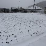 Под снегом посевы, успели, хорошо :) 18 мая