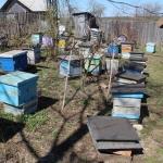 Пасека в с. Красный Завод. Пчеловод Старчевский А.Н.. 1 мая
