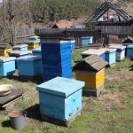 Пасека в с. Красный Завод. Пчеловод Старчевский А.Н. вид 4. 1 мая