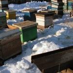 4. Выставили пчел из надземного омшаника.