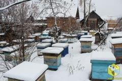 Пчелиные семьи на точке напротив дома, другой ракурс