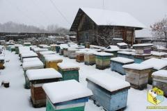 Пчелиные семьи на точке во втором дворе, другой ракурс