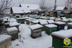 Пчелиные семьи на точке во втором дворе, ещё один ракурс