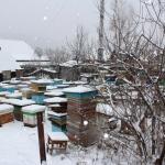 Пчелиные семьи на точке во втором дворе, вид с угла