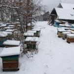 Пчелиные семьи на точке во втором дворе, вид с центра двора