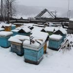 Пчелиные семьи на точке во втором дворе, около дома
