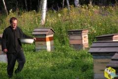 Вода пчелам