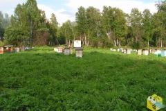 Кочевая пасека в 2006 году