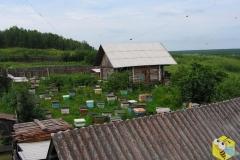 Пасека в деревне