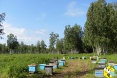 Пасека Старчевских. Улья. Пчелы. Пчеловодство