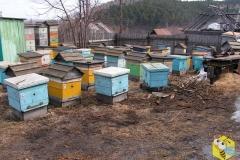 Зимовка пчел прошла успешно. Семьи выставили на улицу. Всего выставили 300п.с.